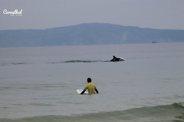 Carvalhal Surf Camp & Dolphins, Comporta Portugal