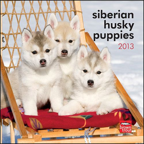 Siberian Husky Puppies Mini Wall Calendar: Siberian Husky puppies are precious, small creatures that are soft to the touch and a joy to hold. Affectionate and playful, these puppies will bring much love to any home.  $7.99  http://calendars.com/Siberian-Huskies/Siberian-Husky-Puppies-2013-Mini-Wall-Calendar/prod201300004640/?categoryId=cat10167=cat10167#