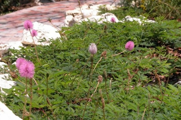 22 best images about native plants for northeast fl on pinterest