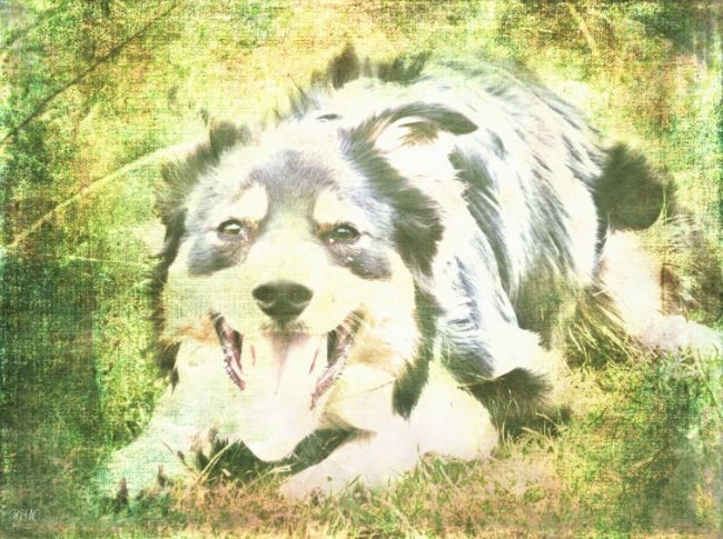My dog Tyzhi, used textures from 2 lil owls