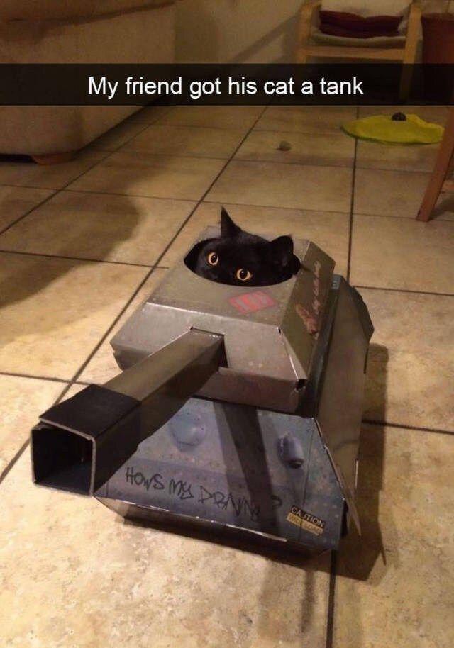 41 SNAPCHATS von bissigen Katzen | CutesyPooh #lus…