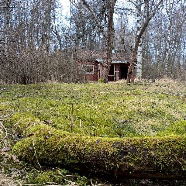 Keskellä Polsanluotoa on vanha autiotalo. Pihapiirissä on aistittavissa vanhan puutarhan jäänteet. #Pori #kansallinenkaupunkipuisto #Polsanluoto #lahopuu #puutarha #tunnelma #maisema #metsä #kätkössä #luontoreitin #lähellä