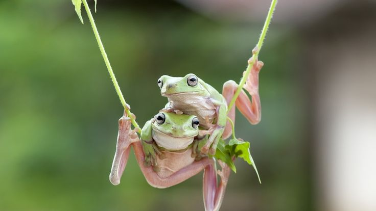beautiful frog friendship hd wallpaper download high quality
