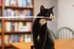 Cats In The Cradle Song Howtotraincats Adventure Cat Cat Training Scratching Cat Training