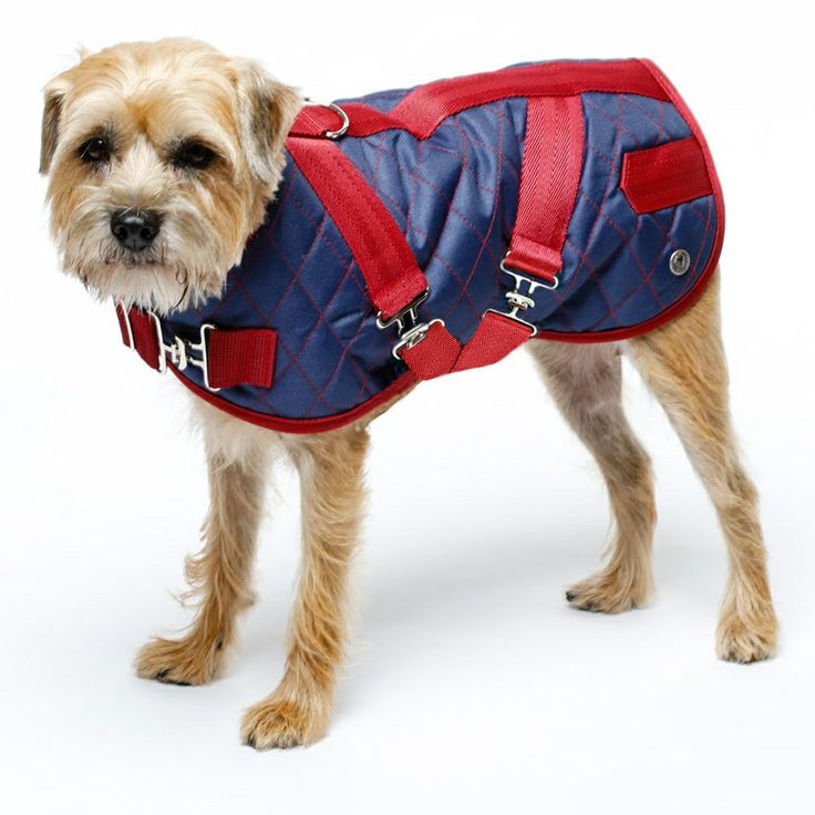 http://www.glamourmutt.com/Quilted-Horse-Blanket-Dog-Coat-2-Colors_p_1681.html