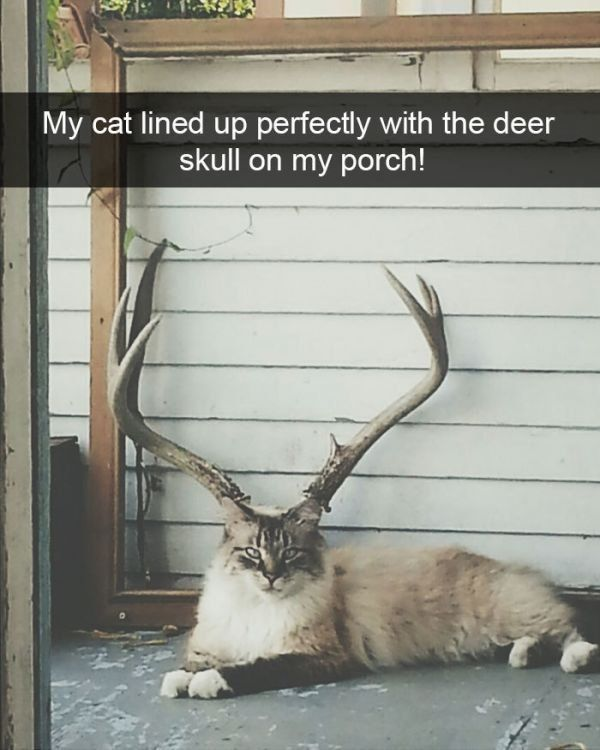 20 Funniest Animal Snapchats