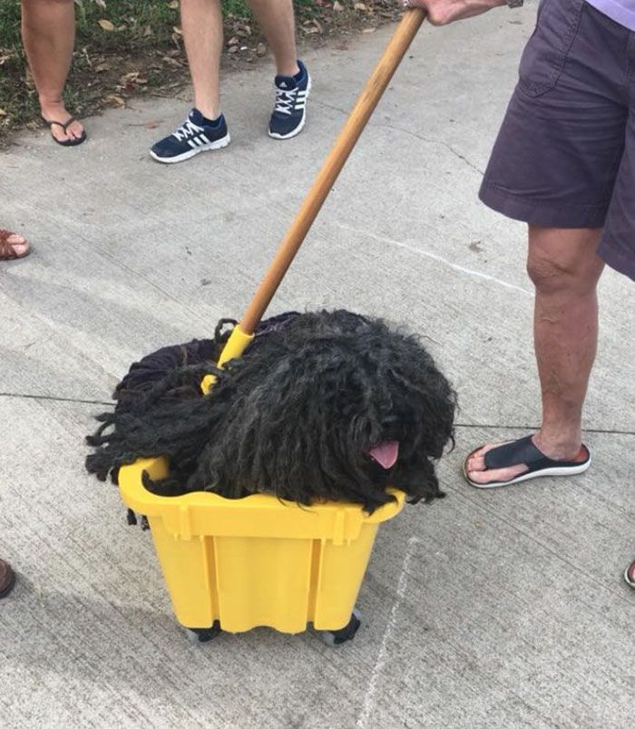 Woman Dresses Her Dog As A Mop And It S Probably The Best Pet