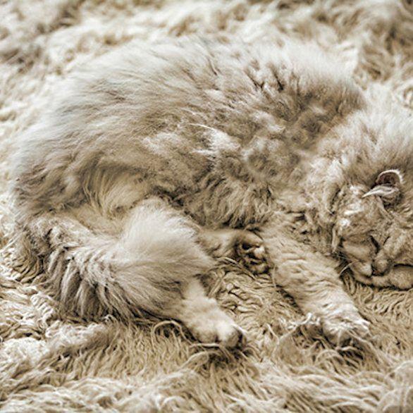 A rejtőzködés mestere akaratlanul is elemében van. ☺😍😸😻 #pihepuha #szőnyeg #macska #cat #kitty #rejtőzködő #drpadlo