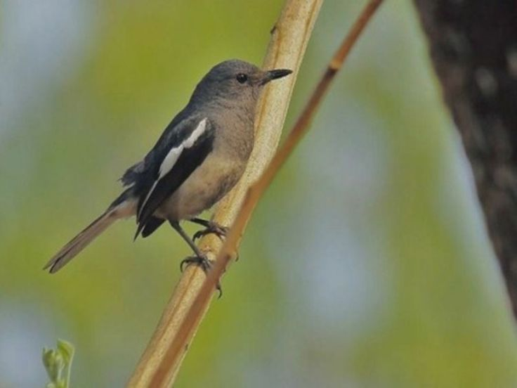 Bird Sanctuaries in Meghalaya, India @ Sanctuariesindia.com