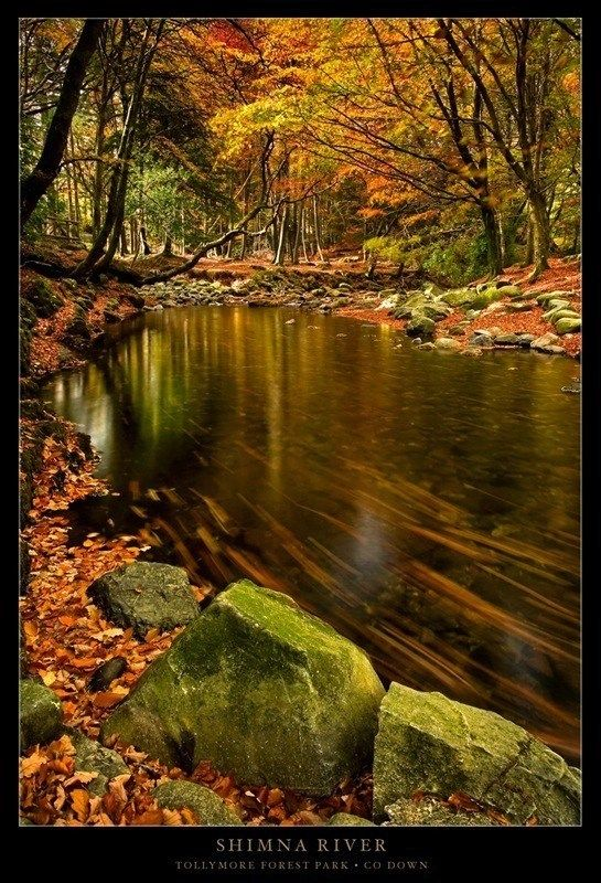 Shimna River in Autumn, Tollymore Forest Park Newcastle, Ireland Copyright: Gary McParland