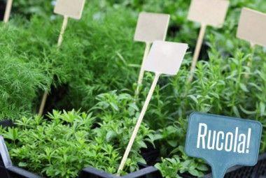 Oltre 25 fantastiche idee su giardino sul balcone su - Giardinieri in affitto consigli ...