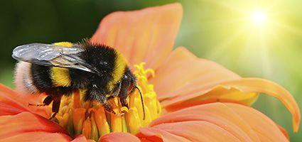 10 Easy ways to help bees in your garden.