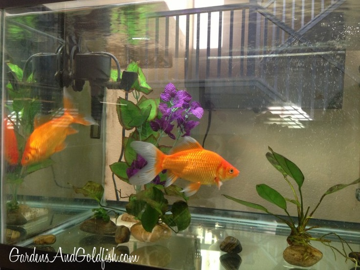 17 best images about aquariums on pinterest silk plants for Self sustaining garden with fish