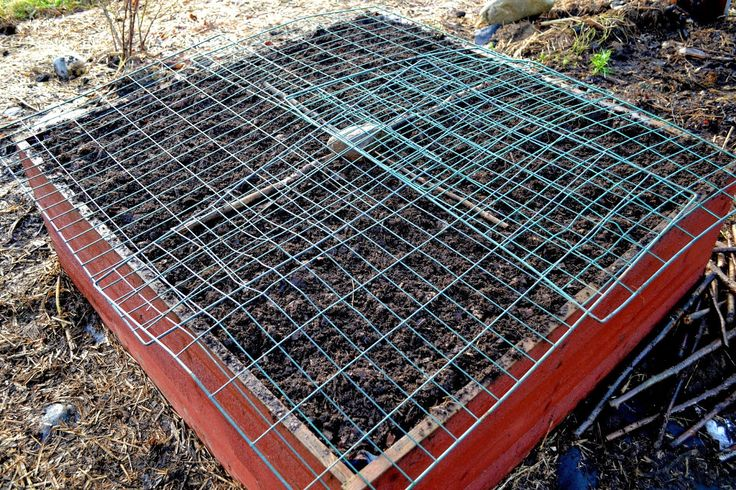 How to protect my winter sowings from cats, children and birds. Ugly but effective! #garden #gardening #kitchengarden #growyourown #vegetables #trädgård #odla #köksträdgård #wintersowing