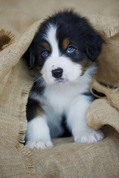 #LieberDschinni , ich habe mir schon IMMER einen Hund gewünscht.