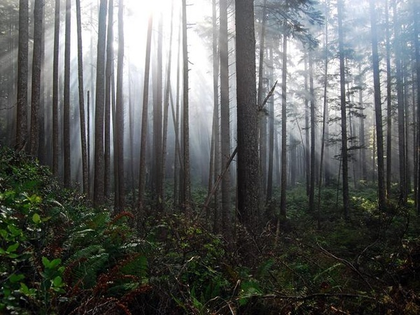 Anonymous Photo snapper. Nevertheless that pic is definitely astonishing.: Dream Vacation, Washington State, Favorite Places, Forks Washington, Amazing Place, 10 Destinations