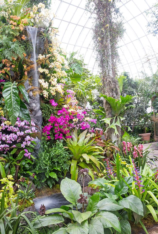 orchid garden image | flower display from the New York Botanical Garden's 2016 Orchid Show ...