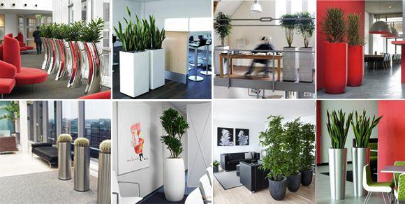 Растения в кашпо Nieuwkoop