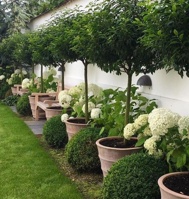 Such a clever idea ... @nete_hojlund #gardenflowers #gardendesign #gardenideas #gardening #gardeners #garden #landscapearchitecture #landscapedesign #landscape #decor #decore #decorate #decorator #decoracao #decoração #decoraçao #styleinspo #styleinspiration #topiary #homedecor #homeinspo #homeinspiration #hydrangeas #luxurylife #luxurylifestyle #gardeninspiration #gardenwedding #jardin #garten #gardenfurniture