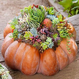 I made one of these Succulent Pumpkin Centerpieces and I love it!
