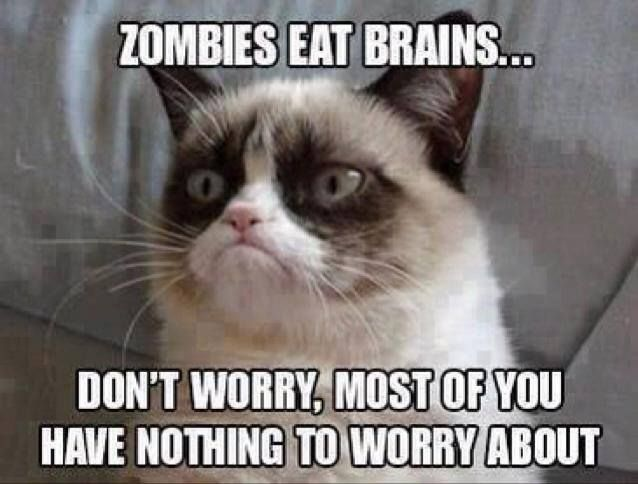 cat brains don t worry fun funny grumoy cat grunpy nothing zombies no ... this cat is priceless