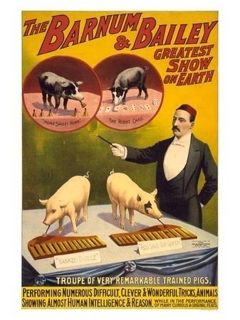 http://www.vinmag.com/online/media/gbu0/prodlg/AP1944-barnum-bailey-pigs.jpg