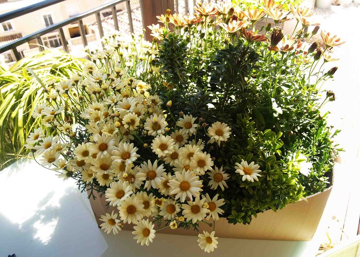 plantas jardín Garden Bathroom, Back Gardens, Irrigation, Garden Styles, Garden Plants, Lawn, Garden Design, Pergola, Home And Garden