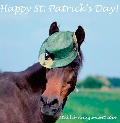 Happy St Patrick S Day Horses Clydesdale Horses