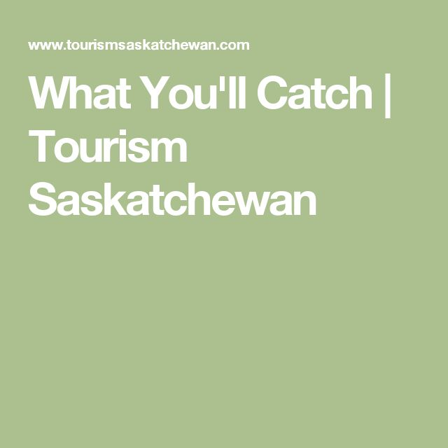 What You'll Catch   Tourism Saskatchewan