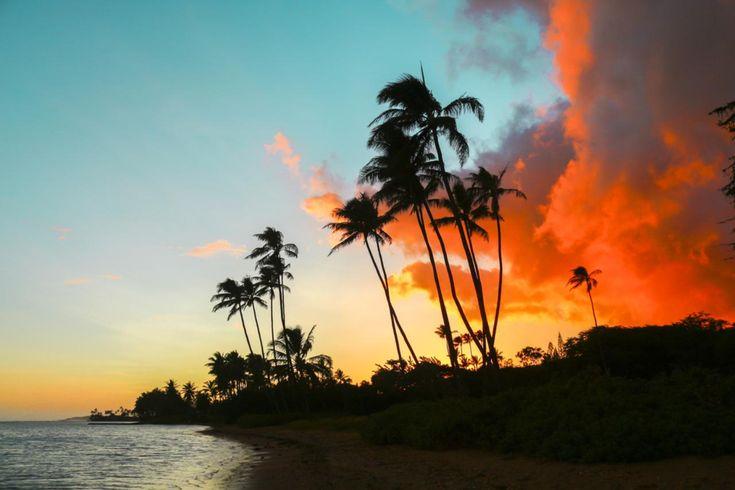 冬はやっぱりハワイ♡真冬のハネムーンのアイデアを集めました♡