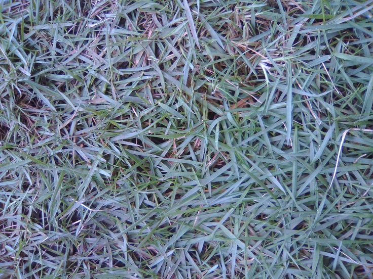 Rumput jepang  Bagi Anda yang berminat untuk mengubah halaman yang dulunya gersang karna kurang penghijauan disini kami sebagai jasa tukang taman memberi ide-ide untuk halaman rumah agar menjadi hijau dengan hamparan rumput. Kami sabagai jasa tukang taman melayani pemasangan rumput seperti, rumput jepang, rumput gajah mini, rumput gajah cikande, rumput babat, rumput green gollf dan lain-lain.  Segera hubungi kami Hp. 085219380248