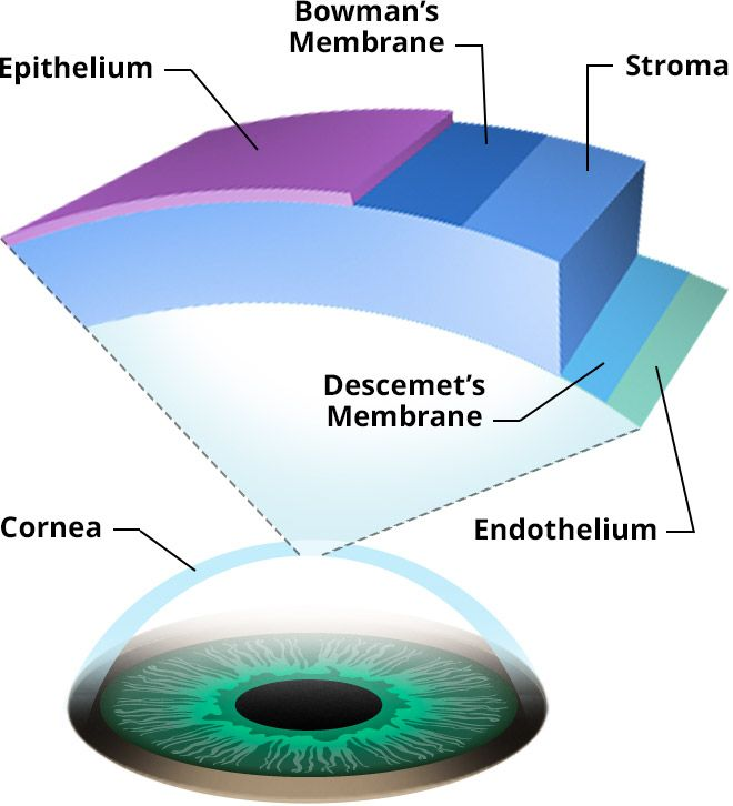 diagram of eye showing cornea gallery