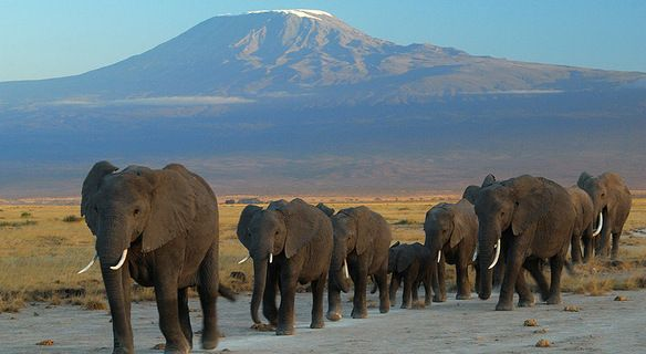 During your #TanzaniaSafari you will see so many amazing animals and have incredible adventures. Know more @ http://northernmasailandsafaris.com/