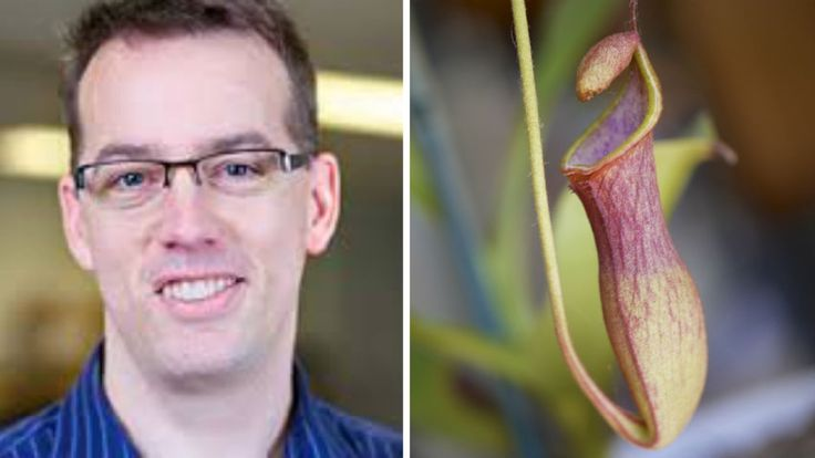Calgary scientists have made a breakthrough that could help celiac patients digest gluten with the help of an enzyme from carnivorous pitcher plants.