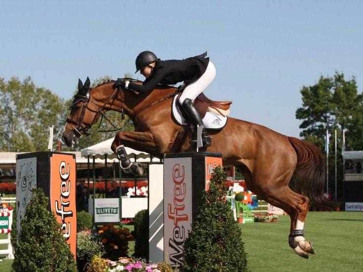 Il #cavallo nel salto #ostacoli è equilibrio, potenza ed eleganza, tutto racchiuso in un unico corpo.