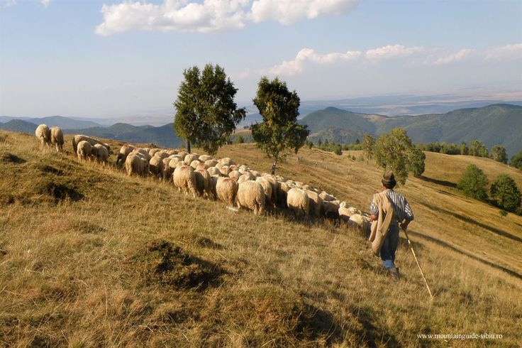 The Cindrel Mountains - Site-ul oficial al județului Sibiu