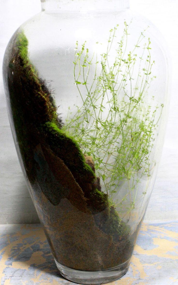 best terrarium images on pinterest gutter garden succulents