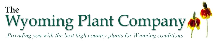 Wyoming Plant Company awesome resource-providing you with the best high  country plants for Wyoming conditions
