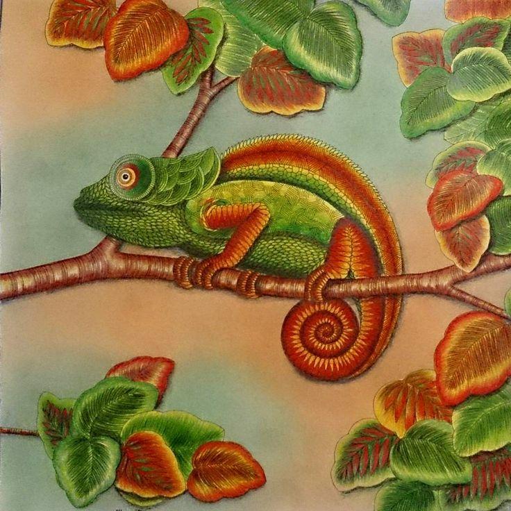 Colorindolivrostop Colorful Coloriagepouradultes Coloringbooks Milliemarotta Animal KingdomColorfulPsSearch