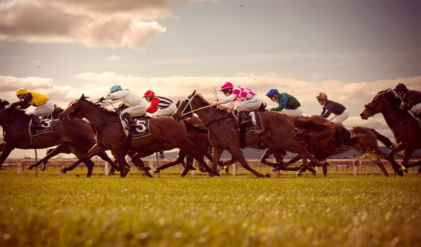 FLIPP Management   Dean Zillwood for New Zealand Racing #trots #horses #racing