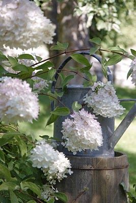 Hydrangeas & old watering can <3: White Gardens, White Flower, Gerbera Daisies, Modern Country, Gardens Idea, Watering Cans, Water Cans, White Lilacs, White Hydrangeas