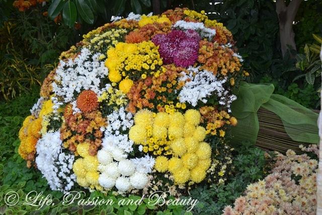 Life, passion and beauty: Pictures: Expozitia de flori, fructe si seminte