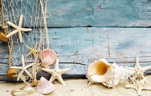 Обои картинки фото seashells, starfishes, beach, sand, marine, wood, ракушки