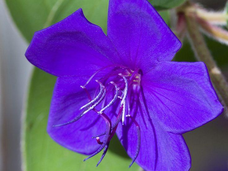 The Princess Flower