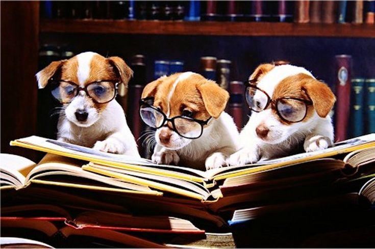 Resultado de imagem para study animals