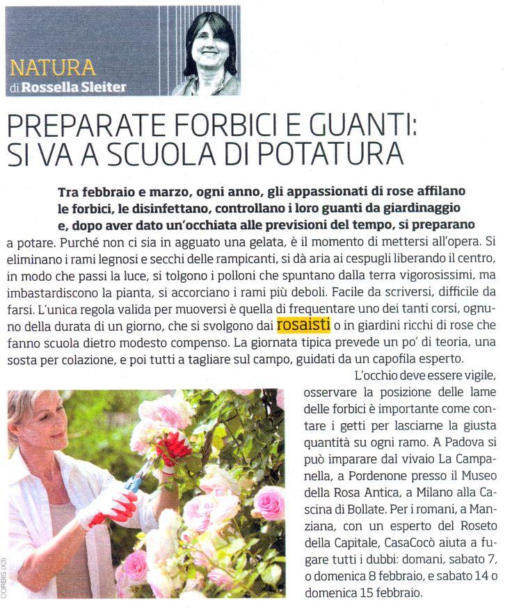 Potatura rose, Il Venerdì (6 febbraio 2015)