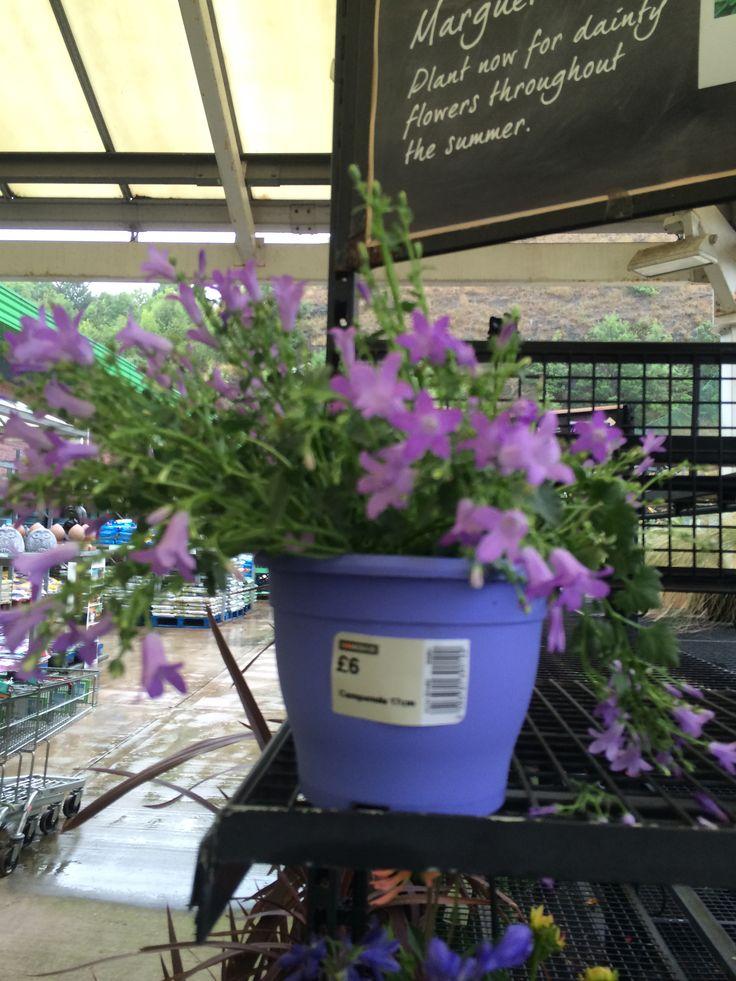 Purple dainty flower