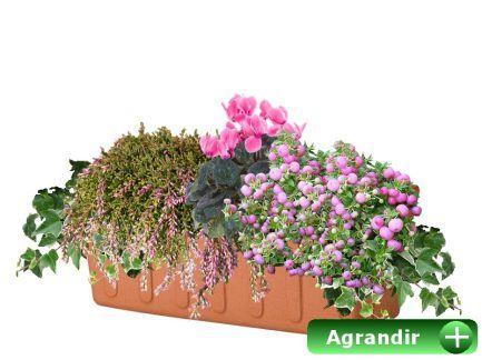 Faire ses jardinières d'automne:
