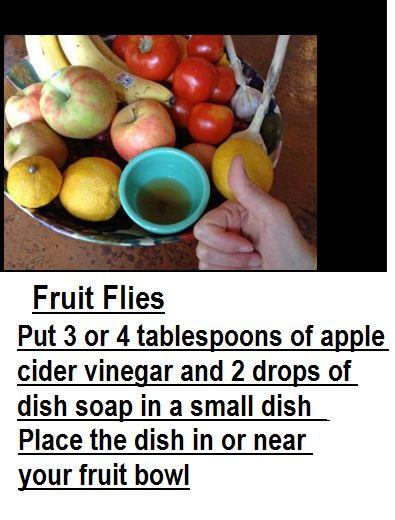 stinky fruit essential oils for fruit flies