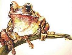 watercolor paintings of lizards - Google Search